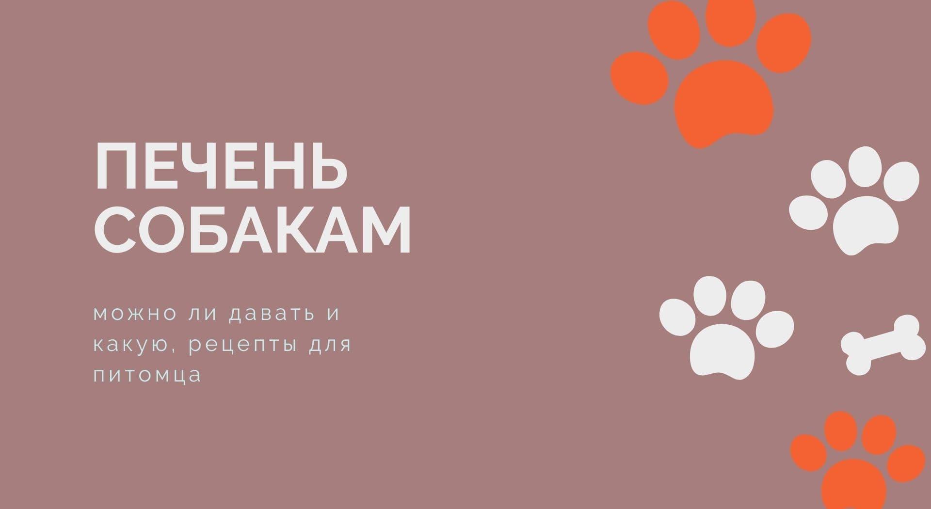 Печень собакам: можно ли давать и какую, рецепты для питомца